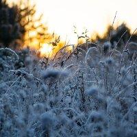 Зимний закат солнца :: Ольга Семина