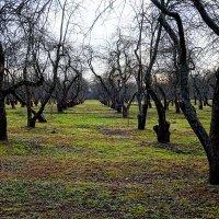 Зимний сад :: Alex Sash
