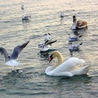 Птичий базар :: Ольга (crim41evp)