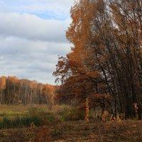 Заблудилась осень меж берез. :: Инна Щелокова