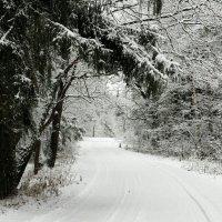 В царстве снега. :: Милешкин Владимир Алексеевич