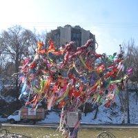 Свадебное дерево, как новогодняя  елка с украшениями... :: Alex Aro Aro Алексей Арошенко
