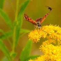 опять бабочки...22 :: Александр Прокудин