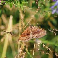 Бабочка :: Сергей Пиголкин