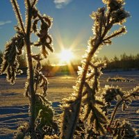 Морозное утро :: олег свирский