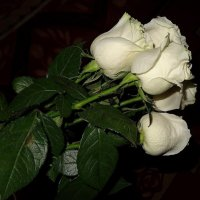 Букет белых роз вечером :: Натала ***