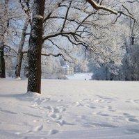 Зима в парке :: dli1953