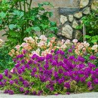 Цветы необыкновенной красоты! :: Варвара