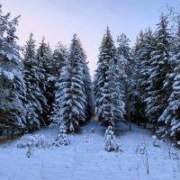 Сказочный зимний лес :: Ирина Беркут