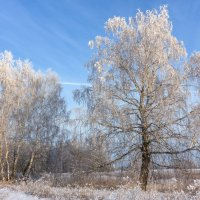 Зима... :: Алексей Сметкин