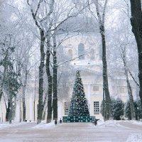 Новогодний туман. :: Тамара Бучарская