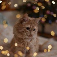 Фотосессия для кота.. :: Зинаида Манушкина