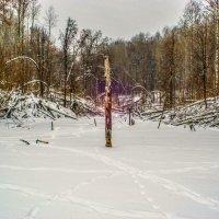 лес :: Денис Геранькин