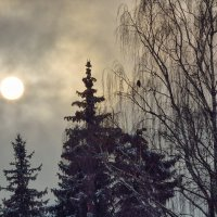 Зимнее солнце :: Михаил Танин