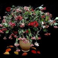 Есть цветы для ваЗ..а есть не для ваС! :: TAMARA КАДАНОВА