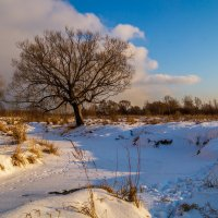 Зима .... :: Андрей Дворников