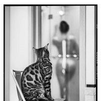 Котка :: SERGEY KRISTEV