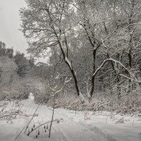 Графика зимнего леса. :: Николай Галкин