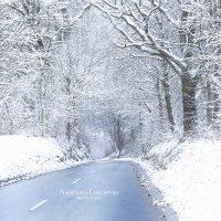 Спит лес сладко, тихо, нежно в чудной шубке белоснежной. :: Nadezhda Laschinski