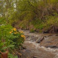 Несёт ручей мутные воды... Дождь. :: Михаил Соколов