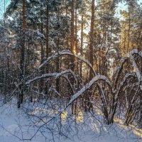 Зимний лес. :: Алексей Трухин