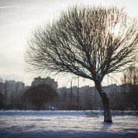 Зима в городе :: VL