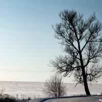 Пришла и в Пруссию зима :: Сергей Половников