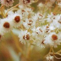 Нежность цветов :: Faina Popova