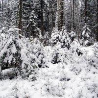В зимнем лесу. :: Лия ☼