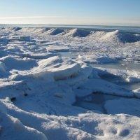 Прогулки у Финского залива в Нарва-Йыэсуу :: veera (veerra)