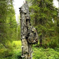 Абориген леса. :: Galina S*