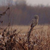 Птица :: Сергей Сол