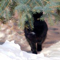 Кот под ёлкой :: Оливер Куин