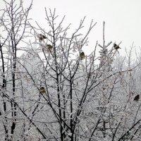 Птички на ветках :: Оливер Куин