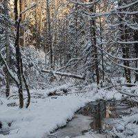 Таежный ручей в ноябре :: Галина