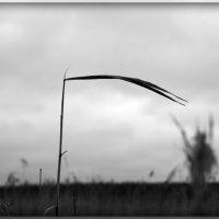 Коса. :: сергей лебедев
