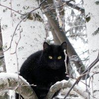 Кот на дереве :: Оливер Куин
