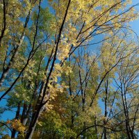 Золотая осень :: Оливер Куин