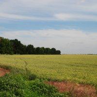 Русское поле. :: Виктор