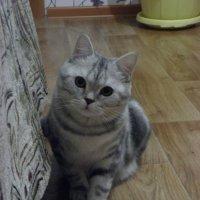 ... :: Ксения Сницаренко