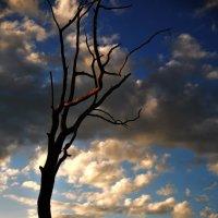 Дерево :: Женя Рыжов