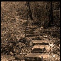 Лестница в лес :: Людмила Тарасова