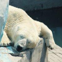 drowsiness :: PunkkyMonkkey =)