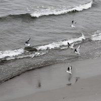 Балтийское море. :: Natalia Line