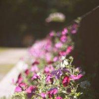 Flowers :: Екатерина Овчинникова