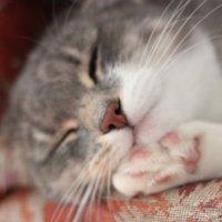 Котик :: Полина Шильникова