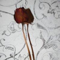Роза :: елена цыганова