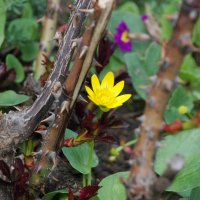 цветок и шипы :: виталий Цицюрский