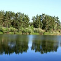 отражение леса :: Павел Бахарев