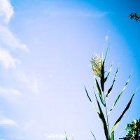 Тянемся к небу :: Ekat Grigoryeva